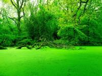 Winning Photo Green Swamp - Crystal Vidler
