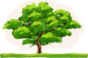 how-to-draw-an-oak-tree